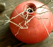 Red clay vase with dry twigs on wooden Royalty Free Stock Images
