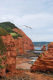 Red cliffs in Devon. Stock Image
