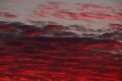 Red clouds at sunset Royalty Free Stock Photography