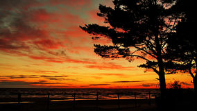 Sunset red clouds over sea coast tree Royalty Free Stock Photos