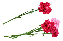 Red clove. Bouquet of carnations. Set carnation flowers vector illustration