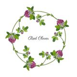 Red clover, blossom shamrock wild field flower hand drawn vector. Sketch isolated on white background, Round frame, graphic floral wreath for cosmetic, design Royalty Free Stock Images