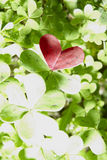 Red clover heart. Abstract green clover and a red heart royalty free stock image