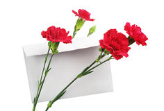 Red cloves flower and empty envelope Stock Photos
