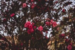 Red Clustered Flowers stock images