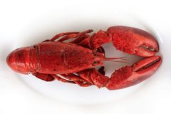 Red cocked lobster. On the white plate macro Royalty Free Stock Photos