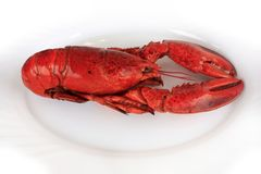 Red cocked lobster Stock Photography