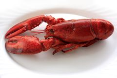 Red cocked lobster. On the white plate macro Stock Photo