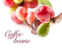 Red Coffee Beans Royalty Free Stock Photos