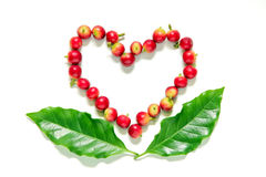 Red coffee beans  berries in heart shape with leaves. Red coffee beans  berries in heart shape with coffee leaf on white background Royalty Free Stock Photography