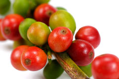 Red coffee beans isolated on white background. Close up of fresh Stock Image