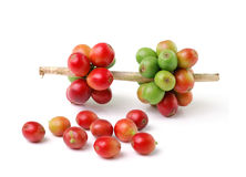 Red coffee beans  on white background Royalty Free Stock Image