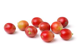 Red coffee beans on white background Stock Images