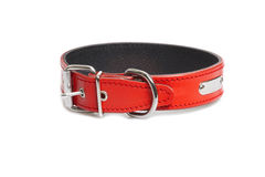 Red collar Stock Photography