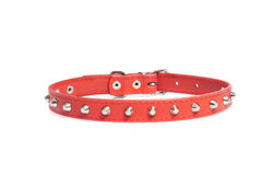 Red collar Royalty Free Stock Images