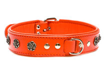 Red collar with rivets Stock Image