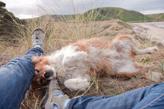 Red collie dog lying beside owner's legs at a beach Royalty Free Stock Photos
