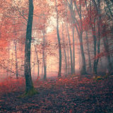 Red color fantasy light forest Stock Images