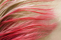 Red color of hair Royalty Free Stock Photo