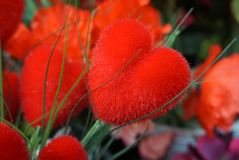 Red heart Shaped beautiful colorful flower royalty free stock photography