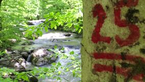 Red color mark on the tree bark and soft focus view through the branches on the mountain stream.