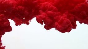 Red color paint ink drops in water slow motion video white background with copy space. Inky cloud swirling flowing. Red color paint ink drops in water slow stock footage