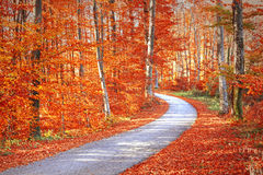 Red color saturated autumn season forest with asphalt road Royalty Free Stock Images