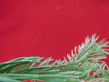 Red colored christmas background with Christmas tree branch in green. Greeting cards and holiday wishes stock photos