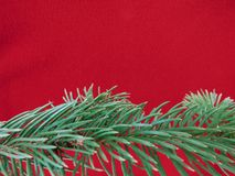 Red colored christmas background with Christmas tree branch in green. Greeting cards and holiday wishes stock photography