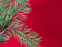 Red colored christmas background with Christmas tree branch in green. Greeting cards and holiday wishes stock image