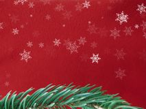 Red colored christmas background with Christmas tree branch in green. Greeting cards and holiday wishes stock images