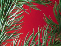 Red colored christmas background with Christmas tree branch in green. stock photos