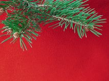 Red colored christmas background with Christmas tree branch in green. Greeting cards and holiday wishes royalty free stock photos