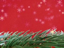 Red colored christmas background with Christmas tree branch in green. royalty free stock photo