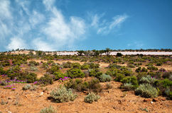 Red colored  Desert - Western Australia. Near Kallgorlie Royalty Free Stock Photo