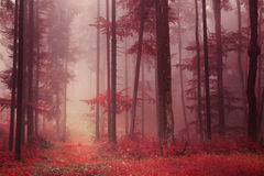 Red colored foggy forest Royalty Free Stock Image