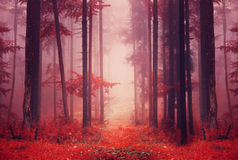 Red colored foggy forest path Royalty Free Stock Photo