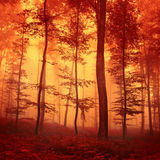 Red colored forest scene Royalty Free Stock Photo