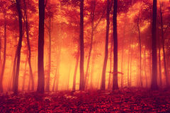 Red colored forest trees Royalty Free Stock Photo