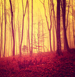 Red colored mystic forest Stock Images