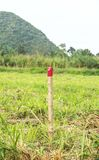 Red colored wooden pole for the setting out of a Field survey Stock Photo