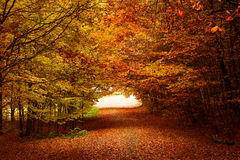 Red and colorful autumn colors in the forest with a road and sun royalty free stock images