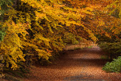 Red and colorful autumn colors in the forest with a road and sun stock images
