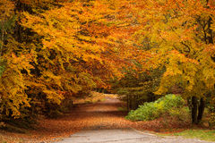 Red and colorful autumn colors in the forest with a road and sun royalty free stock photography