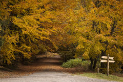 Red and colorful autumn colors in the forest with a road and sun royalty free stock photos