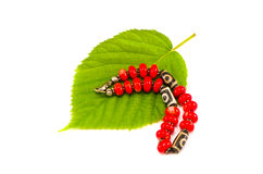 Red colorful bracelet on gree tree leaf isolated Stock Photo