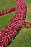 Red colorful flowerbeds in summer Royalty Free Stock Photos