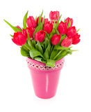 Red colorful tulips Stock Photography