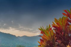 Scenic beauty of Dooars, West Bengal, India. Red Colourful leaves of a tree with blue sky and mountains in the background with copyspace - scenic beauty of stock photography