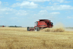 Red Combine Cuts Wheat Royalty Free Stock Photography